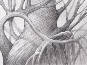 Drawing of a twisted tree