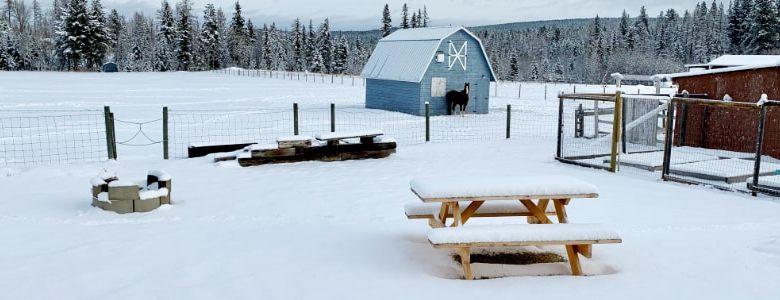 Winter, barn and Bandit