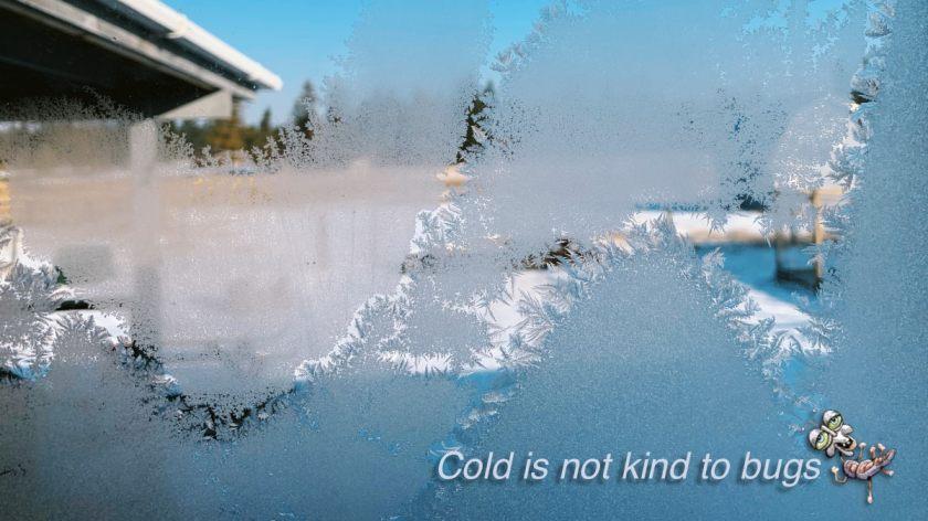 Header photo of frosty window